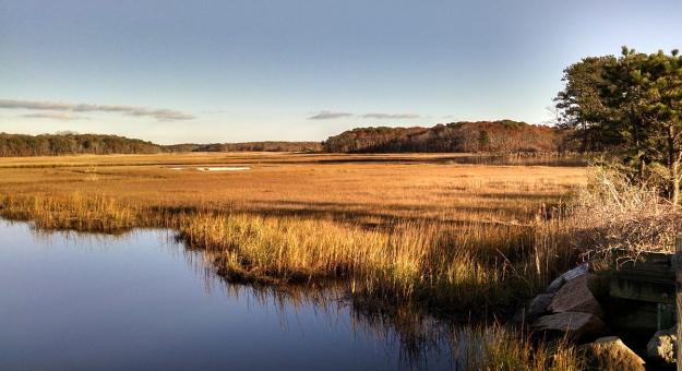 Swalt Grass Swamp