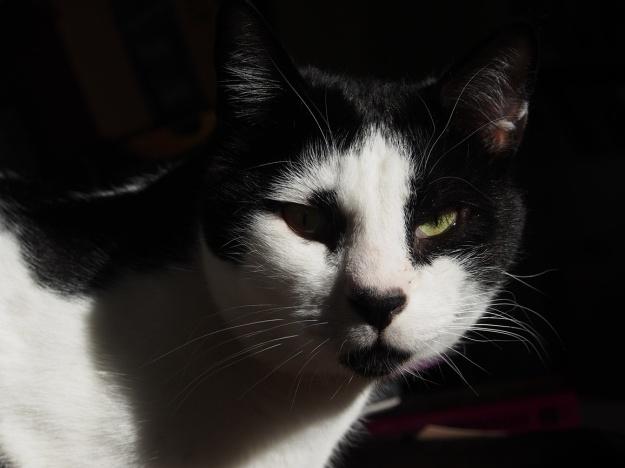 Albert, mid-December 2014