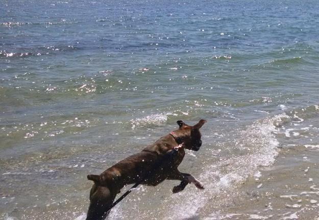 Fiyero on Beach (phone)