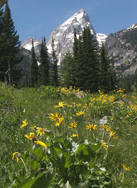 flower-mountain-6-25-02-006a