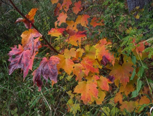 Leaves, heald track
