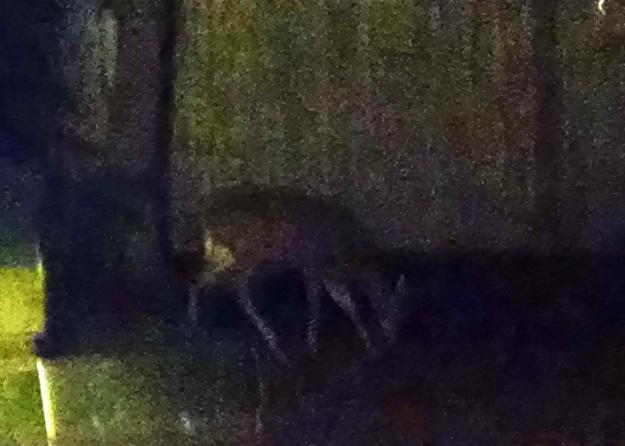 cape-deer-12-12-15