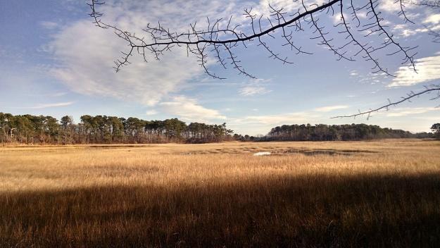 salt-marsh-12-12-15-01