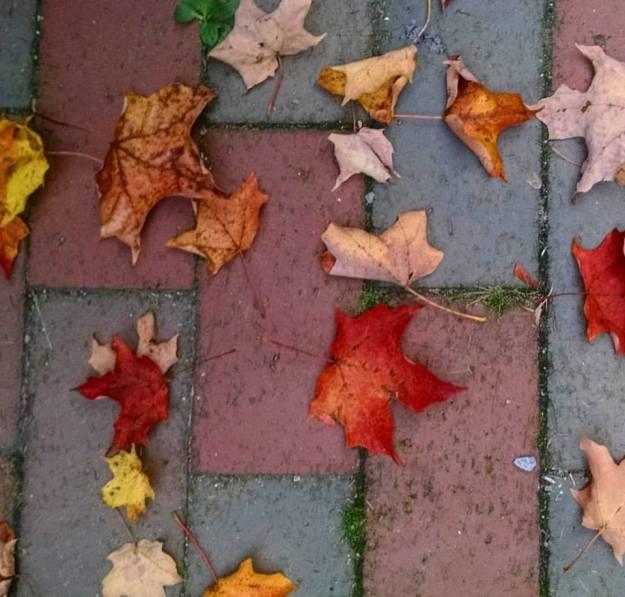 leaves-2016