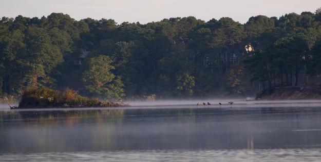 Island Swan Pond