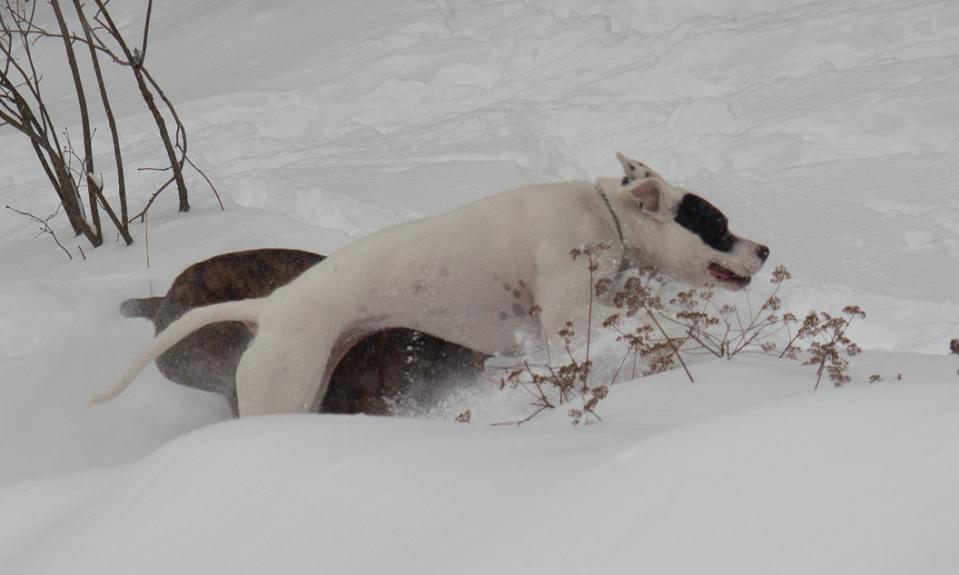 Idina racing Fiyero through the snow