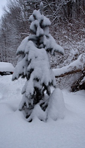 Tree? Snow Troll?