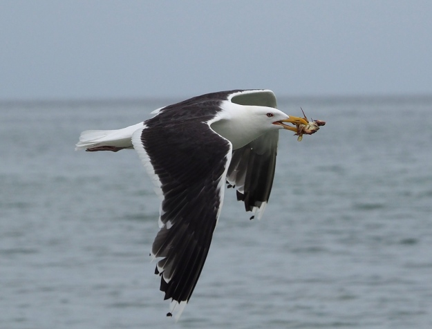 Gull and Crab