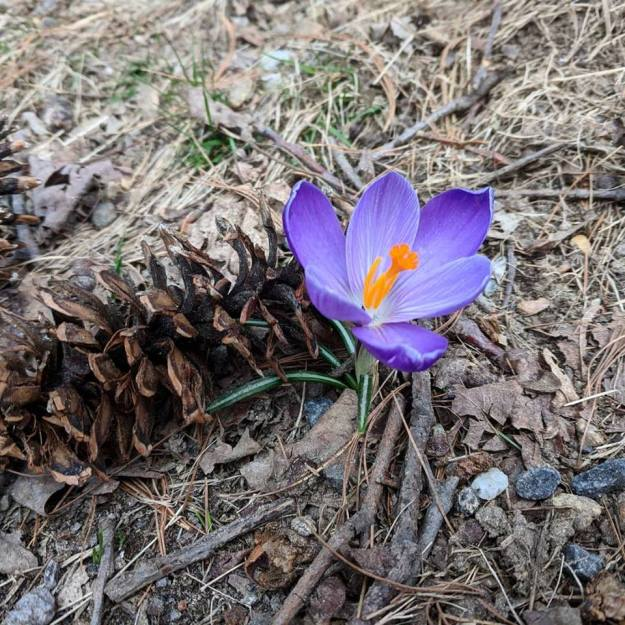 flower-spring-2018