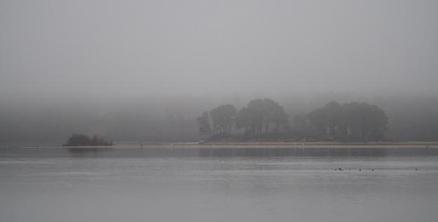 Fog over the pond