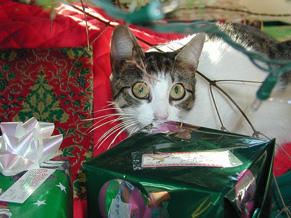 Bartelby under tree