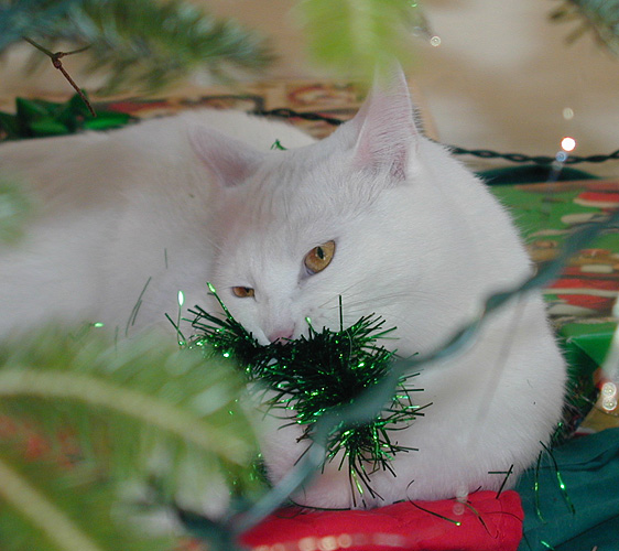 Claudius under the tree