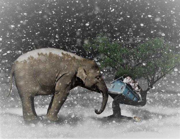 elephant-2910293_960_720
