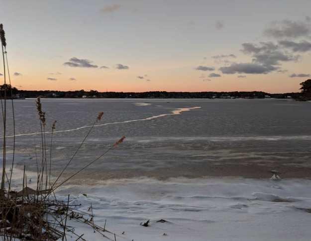 swan-pond-feb-2019