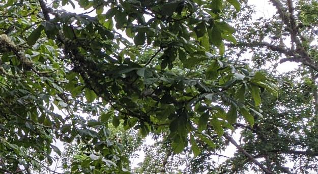 humming-nest-02